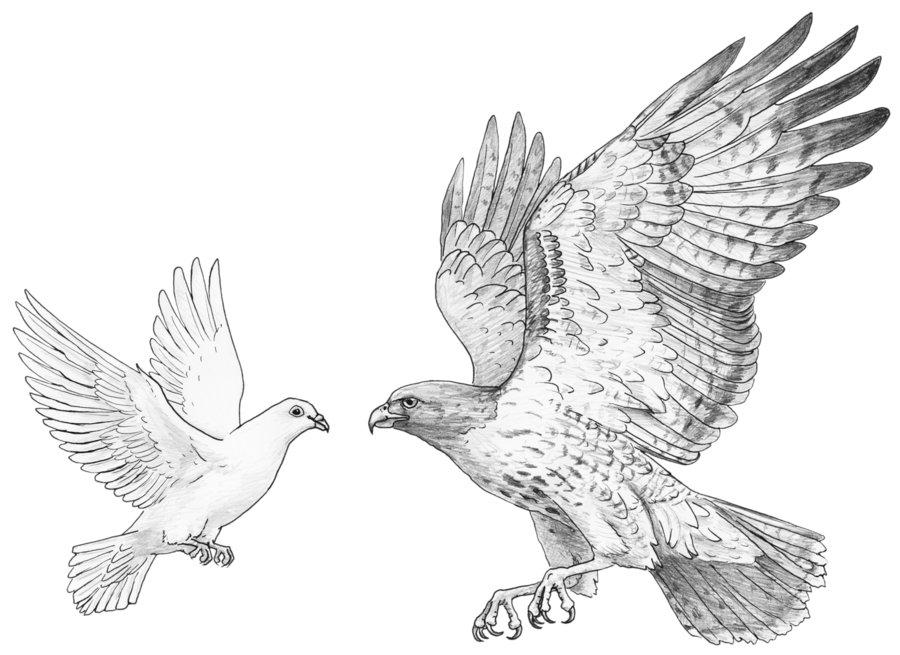 Рисунки орлов и ястребов